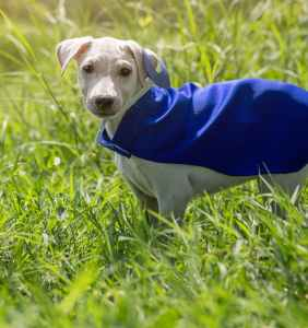 short coated white puppy with blue cape on grass field on focus photo